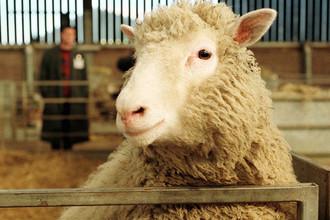 Овца Долли, февраль 1997 года