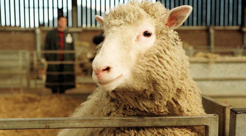 Онлайн секс с овцой