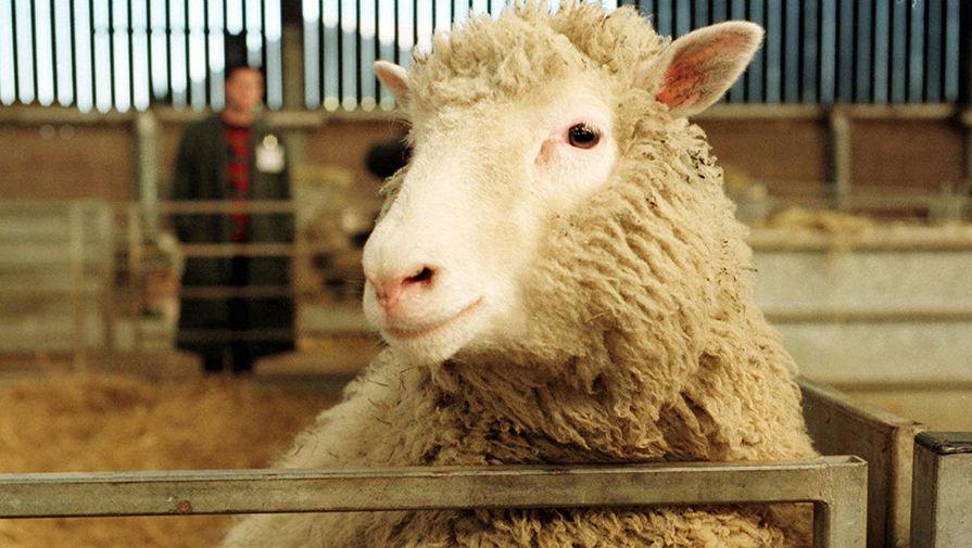 Руководство по сексу с овцой