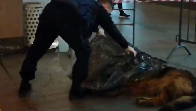 Стрельба на поражение: полицейский убил собаку в метро