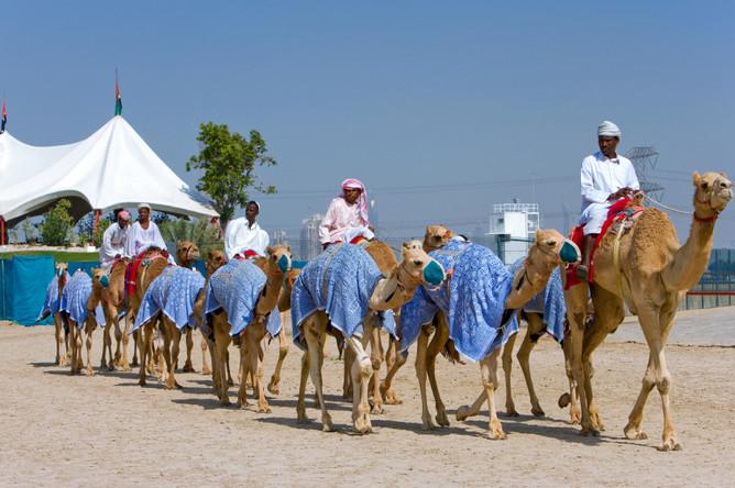 коронавирус верблюдов