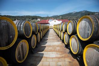 Ряды дубовых бочек для вина мадера на винодельческом заводе «Массандра»