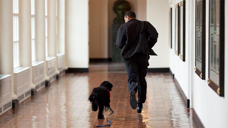 Барак Обама бежит вместе с собакой по кличке Бо по коридору Восточной колоннады Белого дома, 2009 год