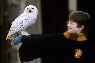 Кадр из фильма «Гарри Поттер и философский камень», 2001