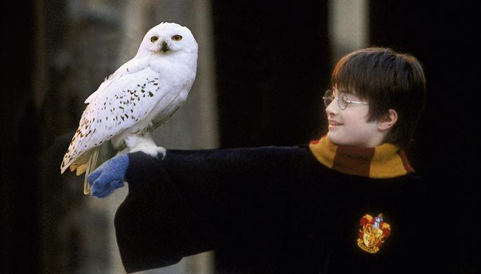 В Британии украли редкое издание «Гарри Поттера» стоимостью £40 тысяч