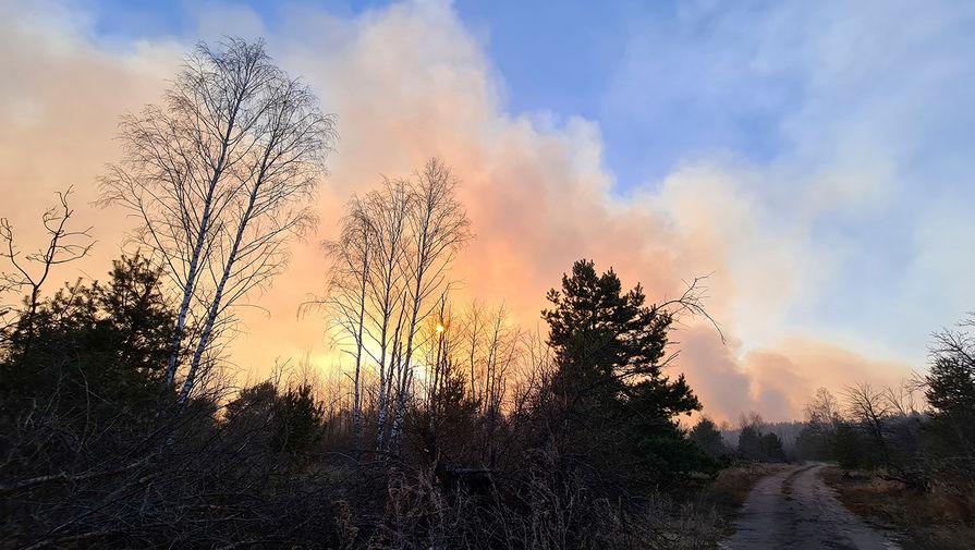 Ситуация с распространением лесных пожаров в запретной зоне вокруг Чернобыля, 5 апреля 2020 года