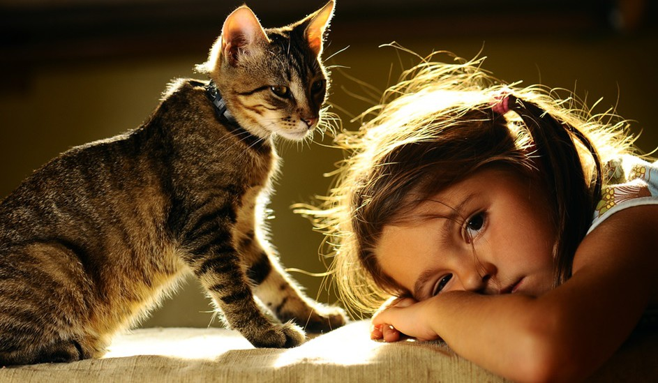 Pets Газета.Ру - Девять шансов взять кошку a61a58510a197