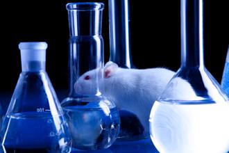 Группа исследователей из Университета Кан опубликовала результаты исследований над крысами