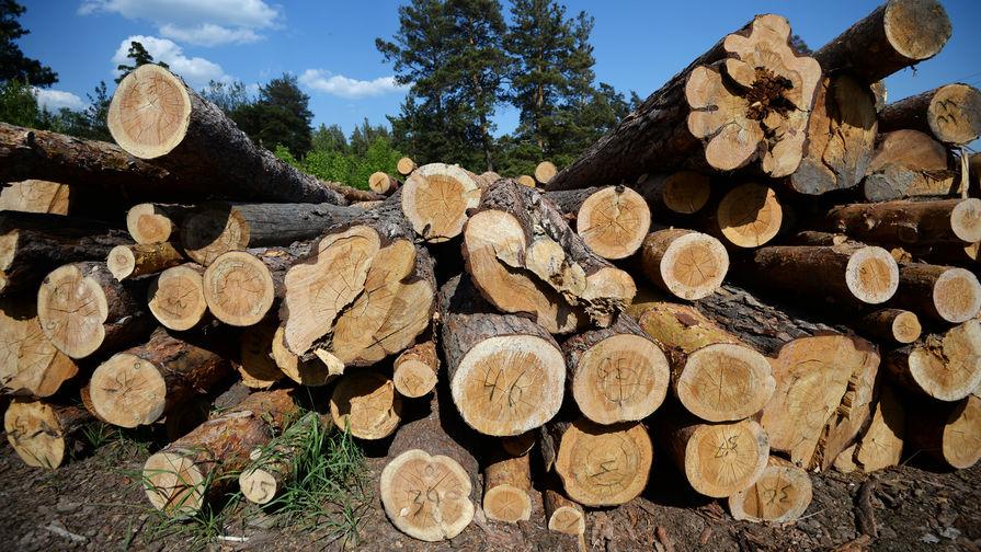 В России в этом году будет вырублен рекордный за несколько лет объем леса