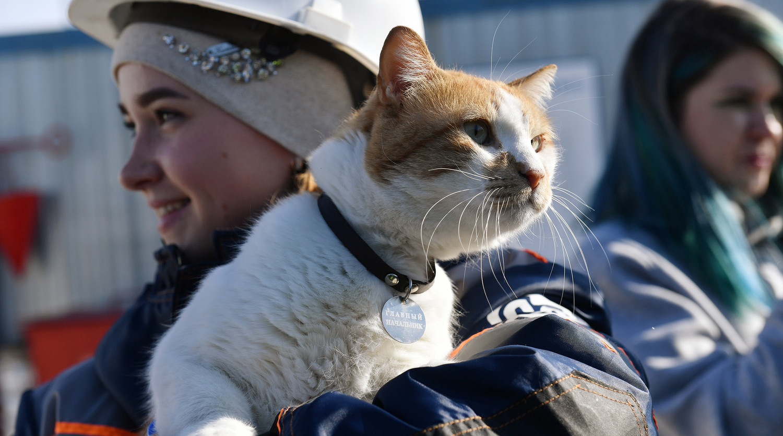 Кот по кличке Мостик на руках строителя Крымского моста, март 2019 года