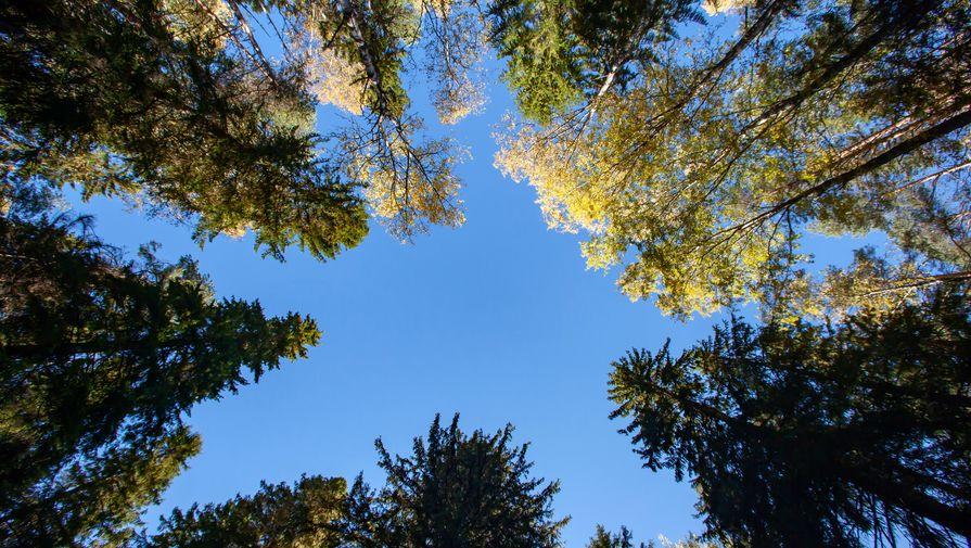 Глава компании Абрамовича предложил приватизировать лес