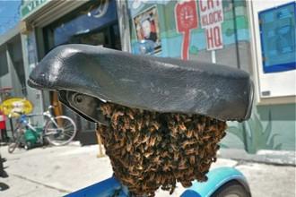 Рой насекомых под седлом велосипеда