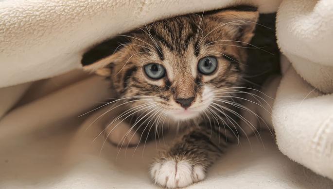 Девочка-маугли подарила омбудсмену котенка из пластилина