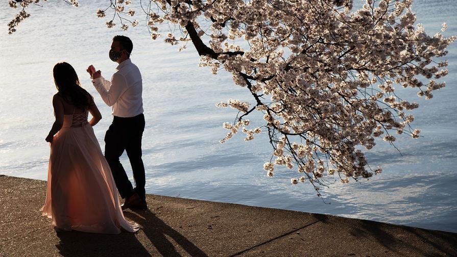 Пара гуляет в Вашингтоне во время цветения сакуры, март 2021 года