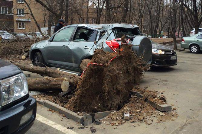 Дерево, упавшее на автомобиль в центре города