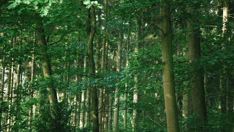 СМИ: Россия предложит бизнесу сажать деревья в обмен на углеродный кредит