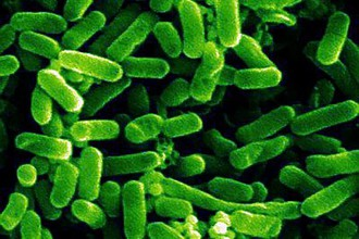 Можно ли научиться предсказывать эволюцию кишечной палочки?