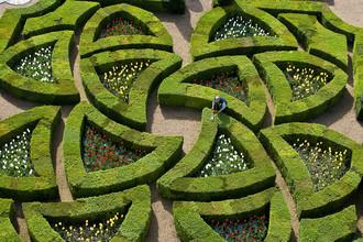 Садовник подстригает изгороди в саду Шато де Вилландри во Франции