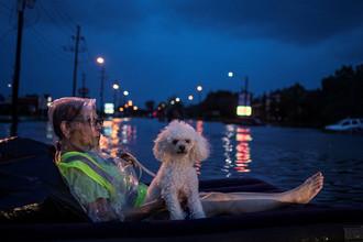Женщина с пуделем во время наводнения после тропического шторма Харви в Хьюстоне, штат Техас, август 2017 года