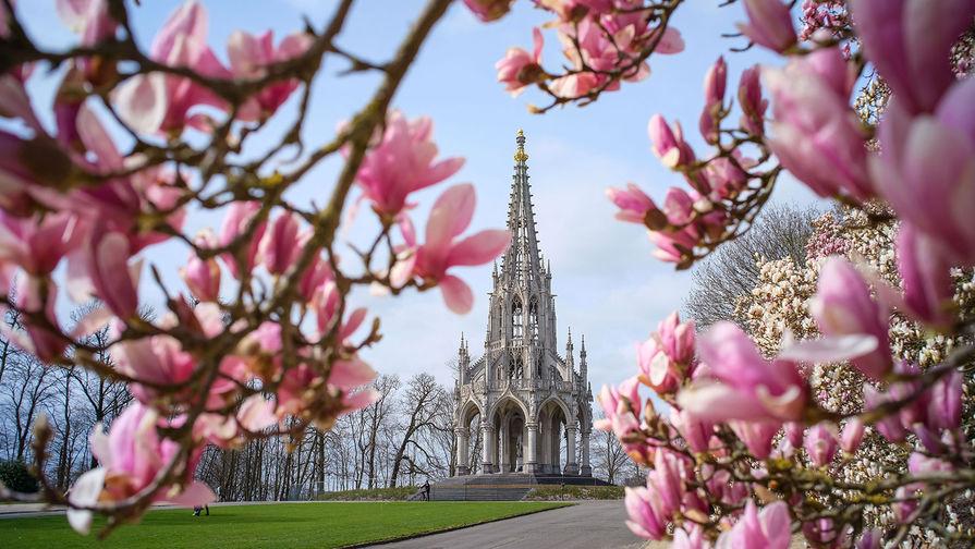 Цветение магнолии в парке Лакен в Брюсселе, март 2021 года