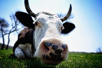 Минсельхоз запросил 15 млрд рублей для животноводов, как компенсацию части затрат на производство молока, масла, яиц и мяса