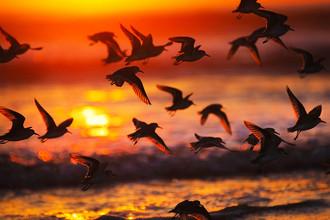 Птицы сэкономили на геноме
