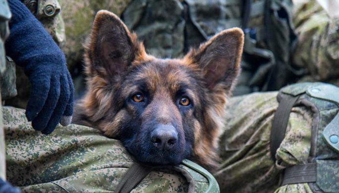 Из-за видео с издевательствами над служебной собакой проверят уссурийских полицейских