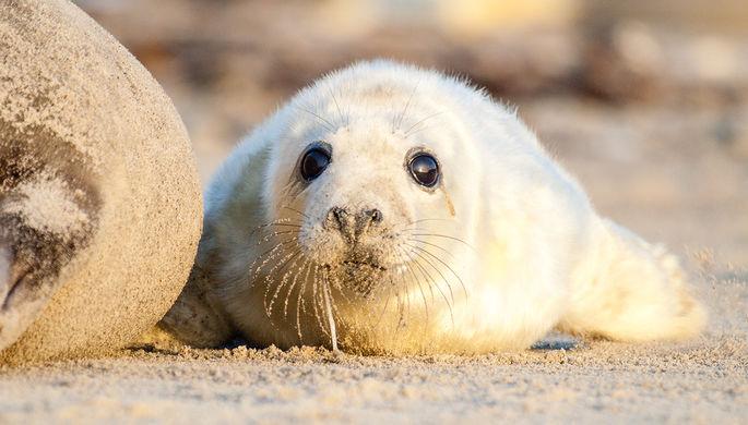 «Цинизм и незнание»: как люди доводят диких животных до смерти