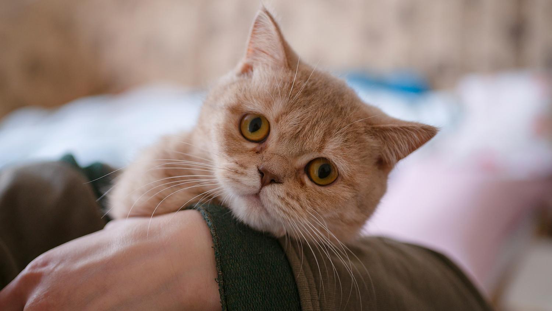 коронавирус у двух котов