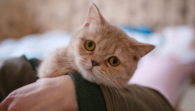 Скитания Муриса и Кузи: коты съехали из Рижской думы