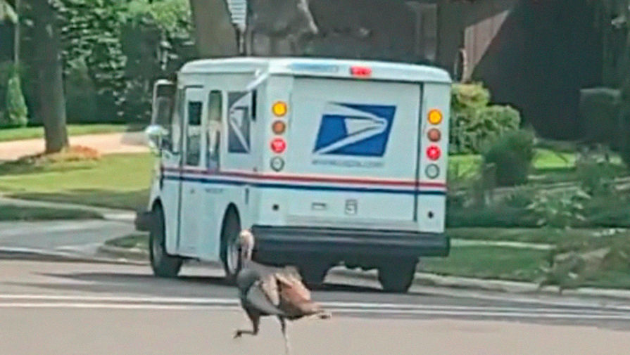 Безумная погоня индюшки за грузовиком попала на видео