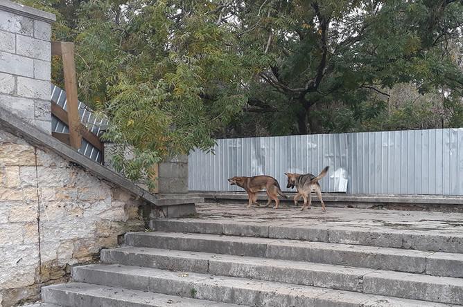 Бродячие собаки на пролетах Митридатской лестницы