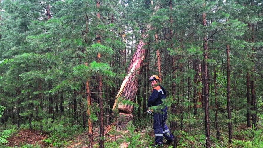 Сотрудник МЧС ликвидирует последствия падения деревьев у озера Маслеево в Дзержинском районе Красноярского края, 5 июля 2020 года