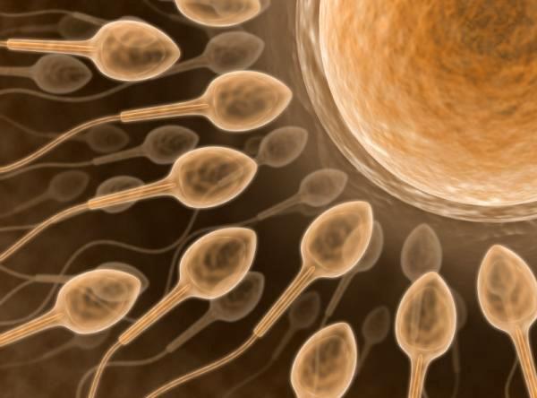 Ученые выяснили, как невесомость влияет на сперматозоиды
