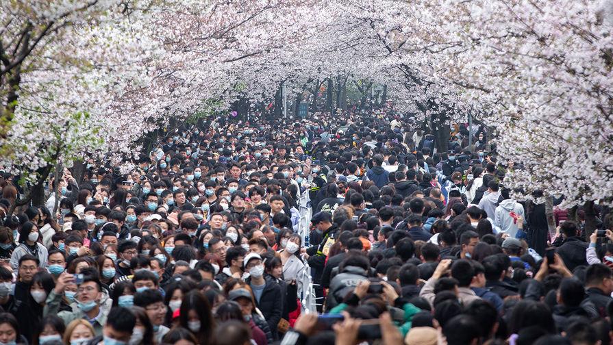 Во время цветения сакуры в парке в Нанкине (Китай), март 2021 года