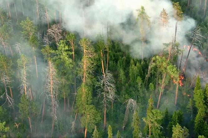 Лесные пожары в Красноярском крае, 1 августа 2019 года