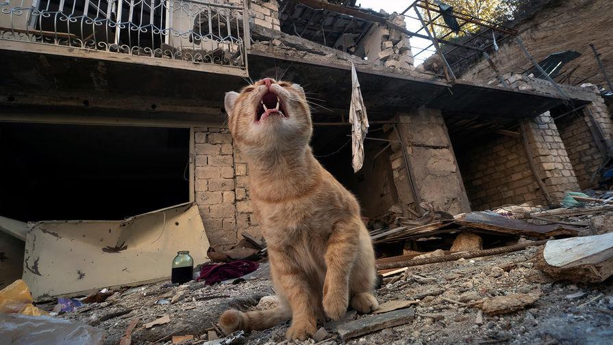 Перемирия не получилось: Баку и Ереван обвиняют друг друга в нарушениях