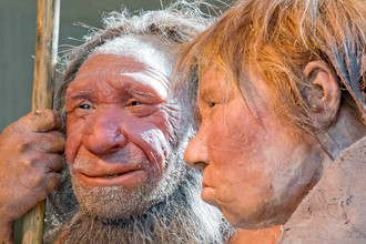 Пара неандертальцев в Неандертальском музее в Германии, 2009 год