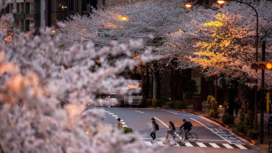 Во время цветения сакуры в Токио, март 2021 года