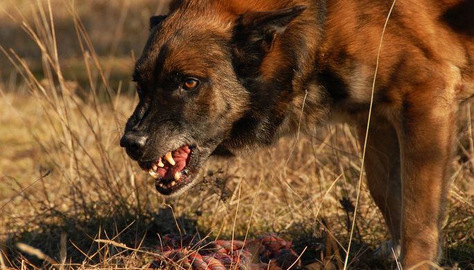 «Собаки жрут людей»: серия загадочных смертей в Красноярске