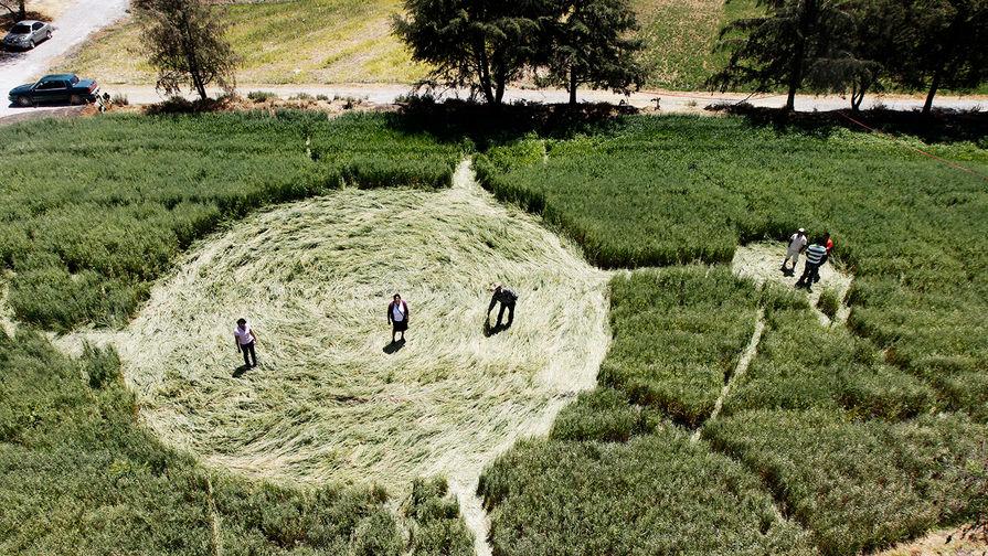 Вихри и термиты: откуда берутся круги на полях