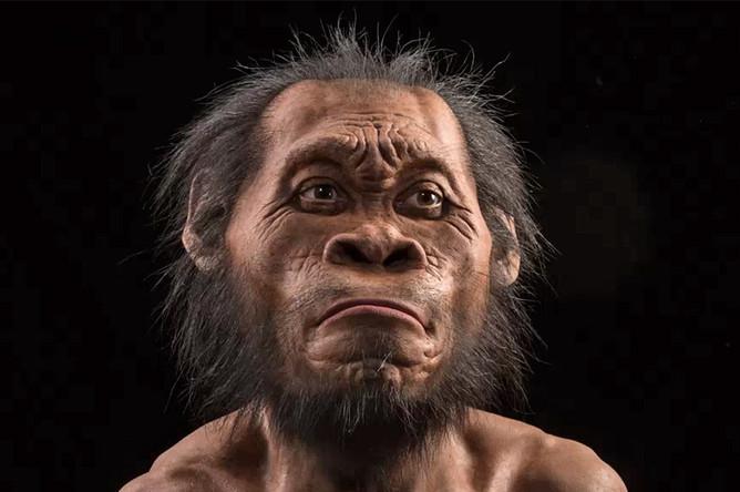 Художественная реконструкция внешности человека Homo naledi
