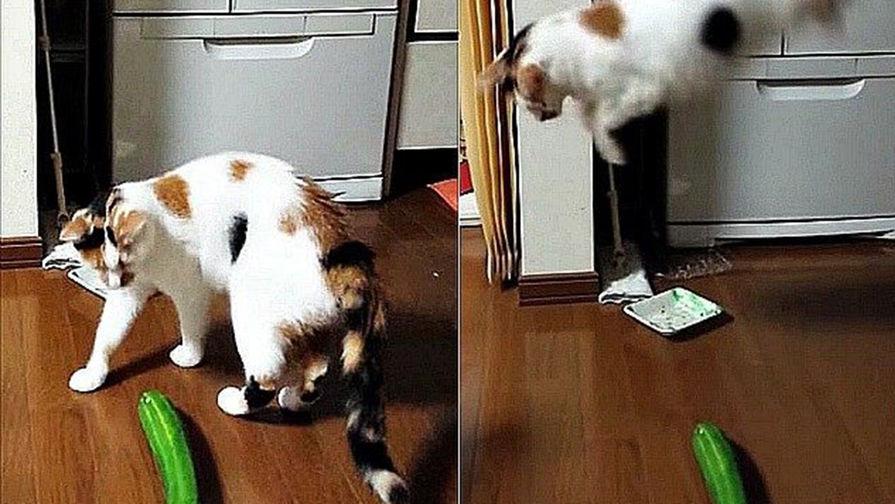 Коты и огурцы видео онлайн бесплатно