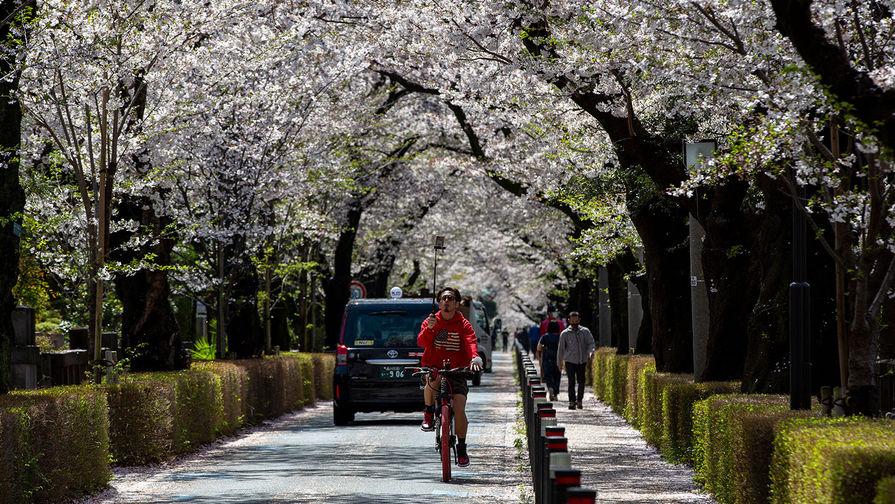 Цветение сакуры в Токио, марта 2021 года
