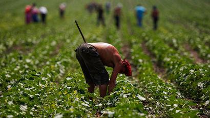 Украина пообещала МВФ отменить мораторий на продажу земли