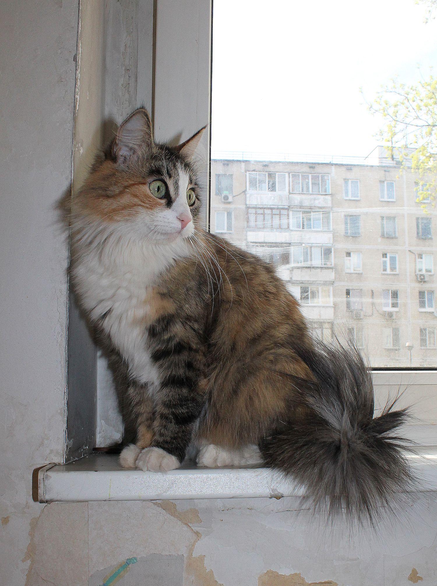 Pets Газета.Ру - Феня - забрать питомца из приюта 4bc28e9929581