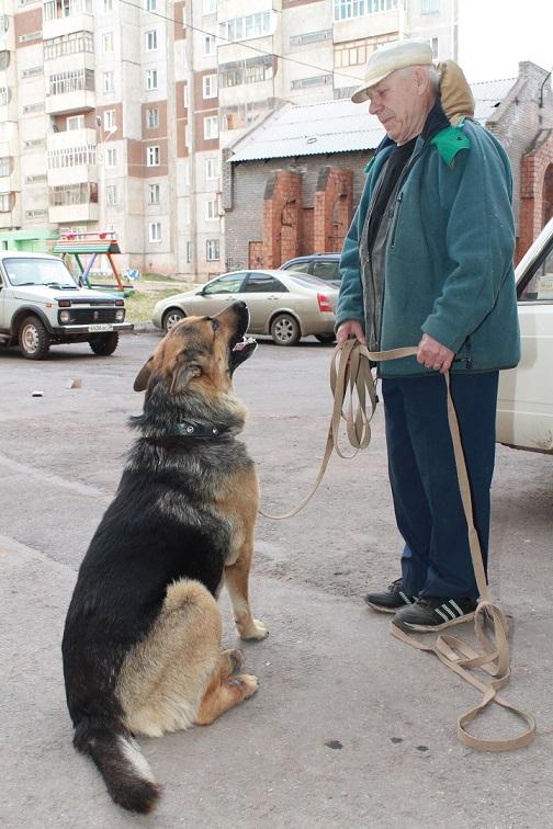 Частное с псом фото 802-699