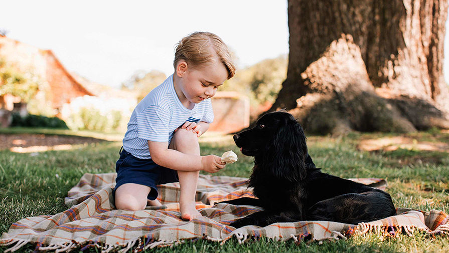 Зевс - самая большая собака в мире - DOCTOR VIC | 505x895