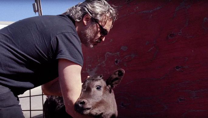 Начал с животных: Феникс спас корову после победы на «Оскаре»