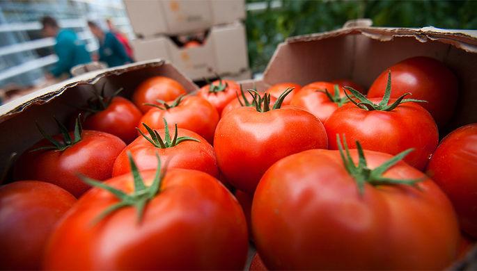 Томат раздора: импортные помидоры могут резко подорожать